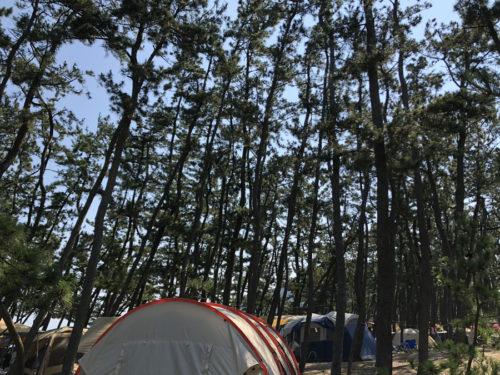 夏キャンプの虫